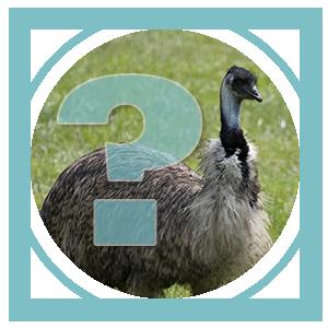Category: Emu FAQs
