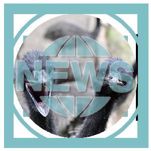 Category: Emu News & Events